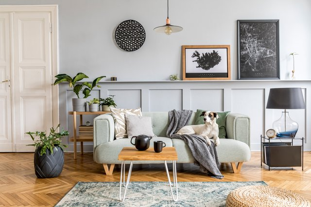 <p>These are all the essential things you need when decorating a living room</p>